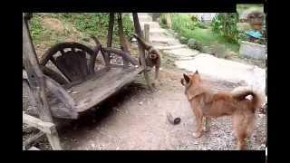 обезьяна дразнит собаку crazy monkey get evil the dog