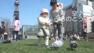 2008年本格的にYoutube巡り始め・・・の頃 ふきのとう/青空 (2008年作)
