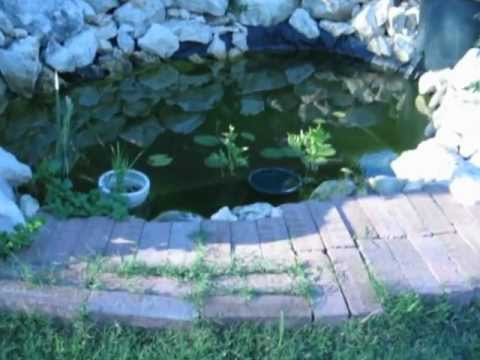 100 watt solar pond with a bio-filter