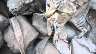 Menyelamatkan Anak Kucing Yang Terjebak di Bebatuan Selama 3 hari
