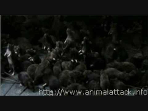 Rats Movie