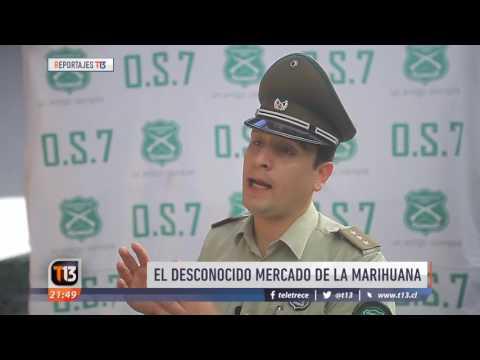Reportaje: El gran negocio de la marihuana en Chile - Tele 13 - 08/05/2017
