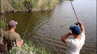 Рыбалка в заливе на карася и большую плотву на поплавочную удочку