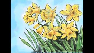 How to Draw Daffodils