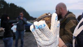 В Воронеже отпустили на свободу 40 летучих мышей