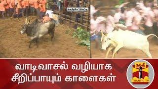 வாடிவாசல் வழியாக சீறிப்பாயும் காளைகள் | Jallikattu | Thanthi TV