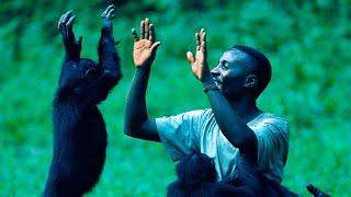 Человек это подвид обезьяны, который хуже обезьяны, и даже не человек. Раскрываю суть. / Видео