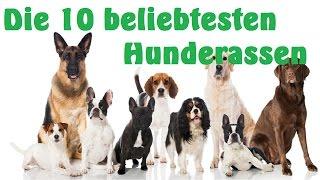 Die 10 beliebtesten Hunderassen 🍀 HD