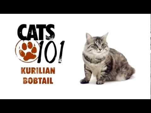 Курильский бобтейл - Kuril Bobtail cat