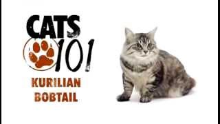 Курильский бобтейл - Kuril Bobtail cat