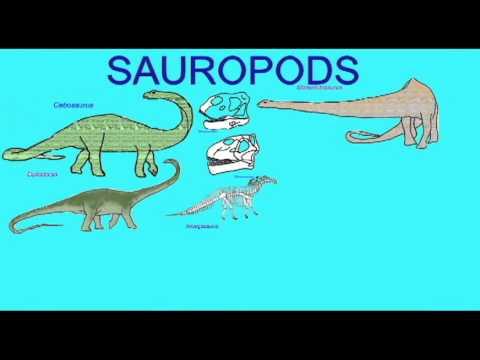 PL EXAM 2: SAUROPODS.avi