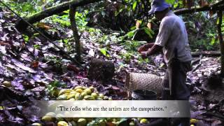 Where Does Chocolate Come From? Hunt Cacao With Nova Monda