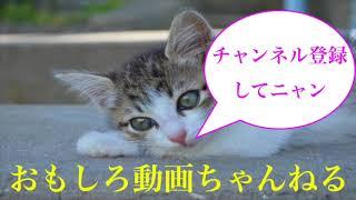 深田恭子が若さを保つメイクのポイントを語る 最新写真集発売 めざまし ...