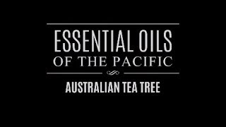 Essential Oils of the Pacific: Australian Tea Tree