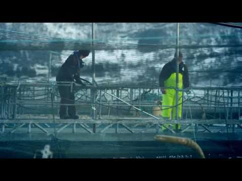 Marine Harvest Norway: Our People and Our Salmon