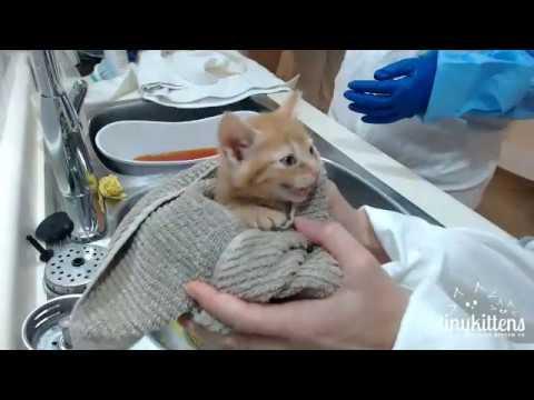 Ferocious feral kittens get their first bath!TinyKittens