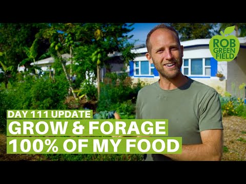 Growing and Foraging 100% of My Food - Day 111 Update