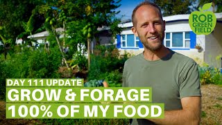 Growing and Foraging 100 of My Food Day 111 Update