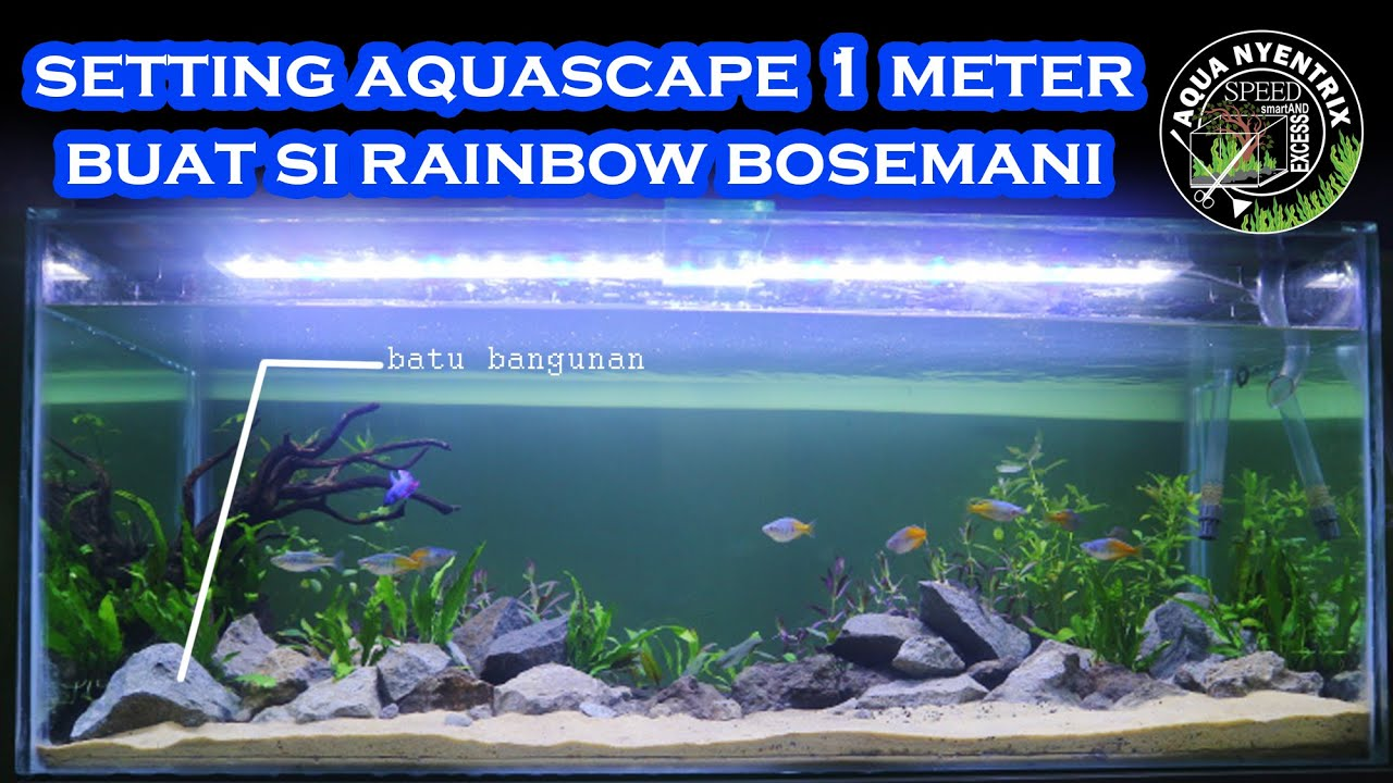 Setting Aquascape Tank 1 Meter Youtube