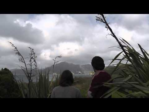 The Flightless Parrot Kakapo