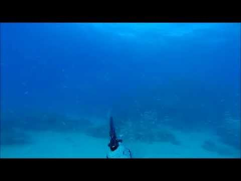 Aquaholics Spearfishing  A Touch of the North