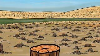 ¡Cuidado con la tala ilegal en Perú!