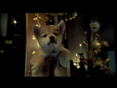 Movie story in free hachiko download hindi a dog