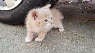 EXPERIMENT: Car Vs Cute Pet | Car Vs Soft and Crunchy Objects