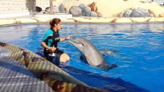 Papina delfin a Filip 05