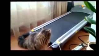 Ржачные кошки часть 2)))подборка