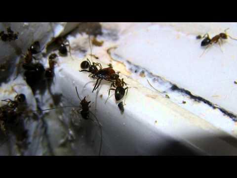 allergies cosm�tiques fourmis et tique 05