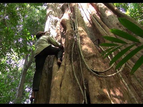 Cambodia 2014 Part3 Banlung Jungel Trekking Virachey Nationalpark , GPS Routen