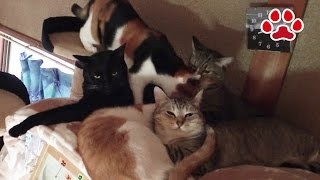 The cat is sleeping on the cage【Cat's room.Miaou】 thumbnail