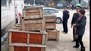 8 hộp gỗ bị vứt bỏ trên mặt đường không ngờ khi mở ra mới biết bên trong là kho báu