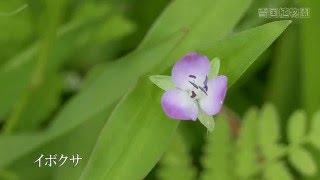 雪国植物園の花々(2015年9月中旬)