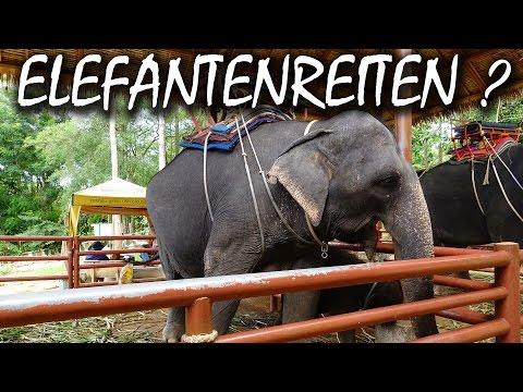 Darum solltest du niemals auf Elefanten reiten – Koh Samui Thailand | VLOG #19