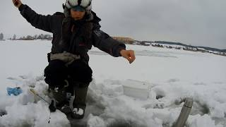 Ловля окуня взимку. Хавайся в бульбу або де риба!? Зимова риболовля в Білорусі. #44