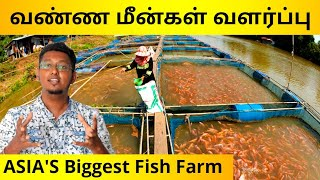 வண்ண மீன்கள் வளர்ப்பு தொழில் | Asia's Biggest Fish Breeding Farm | Business Ideas In Tamil