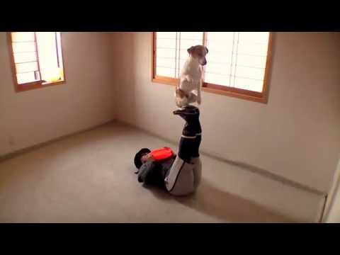 Amazing Frisbee Dog Tricks ① Jack Russell Terrier ☆ capi ☆