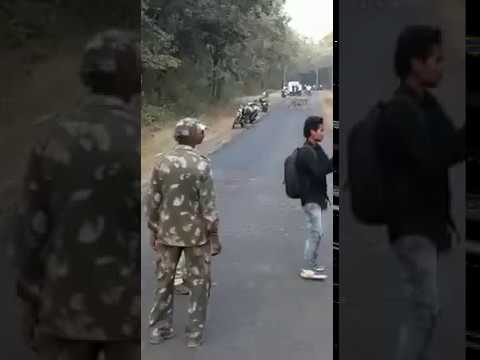 Wild Tiger On Road Tadoba - Chandrapur road