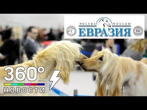 Вопрос: Где и когда состоятся выставки собак в Москве в 2020 году?