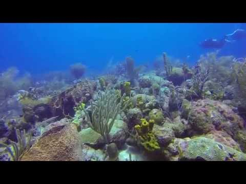 Bell Bouy and Carlisle Bay, Scuba Dive Barbados