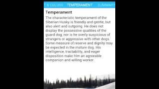 Siberian Husky Reference