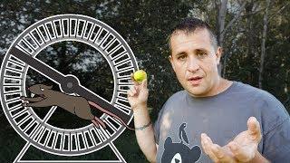 A Plan to Escape the Rat Race