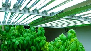 Which are the best Indoor Grow Lights for you ?