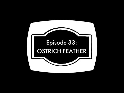 Episode 33 - Ostrich Feather