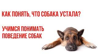 Как понять, что собака устала? Как научиться понимать собаку? Изучаем поведение собак.