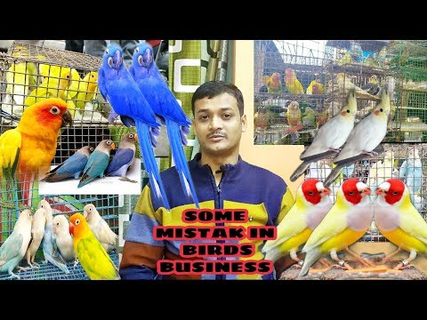 Some Mistake In Birds Breeding Business Site II Full Information About Birds Business