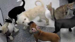 Sparkle, Cypress, And Rocket At Petco/ Alaskan Noble Companion Dog