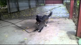 Кот и собака - дружба на веки!